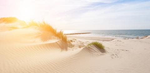 Beautiful sand dunes on the North Sea coast in Renesse, Zeeland, Holland- Stock Photo or Stock Video of rcfotostock | RC-Photo-Stock