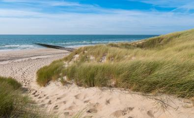 Beautiful sand dunes with ocean on the North Sea coast in Renesse, Zeeland, Holland- Stock Photo or Stock Video of rcfotostock | RC-Photo-Stock