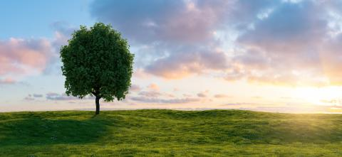 Beautiful sunset landscape with lone tree stands in a green field, copy space for individual text- Stock Photo or Stock Video of rcfotostock | RC-Photo-Stock