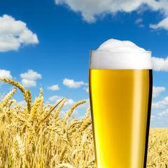 Beer glass in a cornfield : Stock Photo or Stock Video Download rcfotostock photos, images and assets rcfotostock | RC-Photo-Stock.: