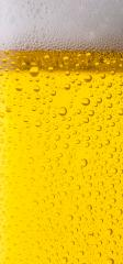 beer with dew- Stock Photo or Stock Video of rcfotostock | RC-Photo-Stock