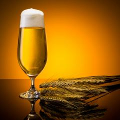 beer with froth crown and corn- Stock Photo or Stock Video of rcfotostock | RC-Photo-Stock