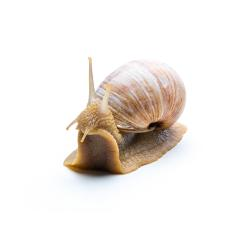 bewildered snail - Stock Photo or Stock Video of rcfotostock | RC-Photo-Stock