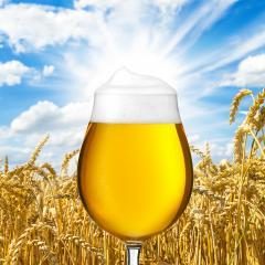 Bier Tulpe (Pils) mir tropfen- Stock Photo or Stock Video of rcfotostock | RC-Photo-Stock