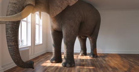 Big elephant calm in a apartment as a funny lack of space and pet concept image : Stock Photo or Stock Video Download rcfotostock photos, images and assets rcfotostock | RC-Photo-Stock.: