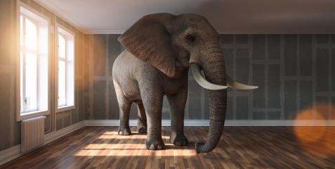 Big elephant calm in a apartment with Flattened drywall walls as a funny lack of space and pet concept image : Stock Photo or Stock Video Download rcfotostock photos, images and assets rcfotostock | RC-Photo-Stock.:
