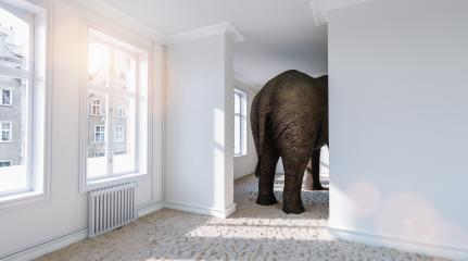 Big elephant from behind in a small room with beach sand on the ground as a funny space problem concept image : Stock Photo or Stock Video Download rcfotostock photos, images and assets rcfotostock | RC-Photo-Stock.: