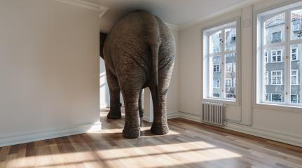 Big elephant in apartment as a funny lack of space and pet concept image : Stock Photo or Stock Video Download rcfotostock photos, images and assets rcfotostock | RC-Photo-Stock.: