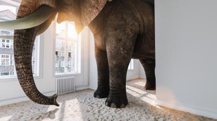 Big elephant in the small room with sand ground as a funny space problem concept image : Stock Photo or Stock Video Download rcfotostock photos, images and assets rcfotostock | RC-Photo-Stock.:
