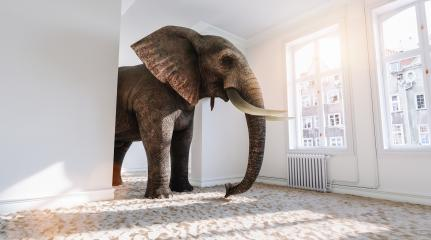 Big elephant in the small room with sand ground from Africa as a funny space problem concept image : Stock Photo or Stock Video Download rcfotostock photos, images and assets rcfotostock | RC-Photo-Stock.:
