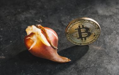 Bitcoin bubble cryptocurrency with Tulip bulbs - Tulip mania market crash- Stock Photo or Stock Video of rcfotostock | RC-Photo-Stock