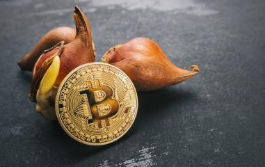 Bitcoin bubble cryptocurrency with Tulip bulbs -Tulip mania market crash concept image : Stock Photo or Stock Video Download rcfotostock photos, images and assets rcfotostock | RC-Photo-Stock.: