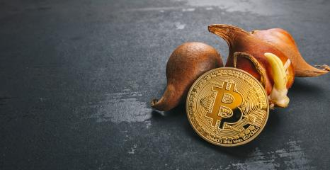 Bitcoin cryptocurrency Coin with Tulip bulbs -Tulip mania market crash concept image- Stock Photo or Stock Video of rcfotostock | RC-Photo-Stock