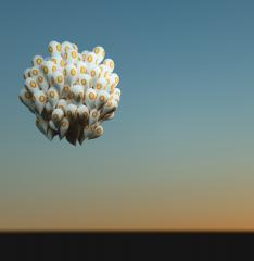 Bitcoin with balloons- Stock Photo or Stock Video of rcfotostock   RC-Photo-Stock