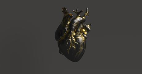 Black Heart with gold Anatomical. Anatomy and medicine concept image.- Stock Photo or Stock Video of rcfotostock | RC-Photo-Stock
