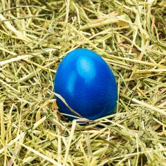 blue easter egg on hay- Stock Photo or Stock Video of rcfotostock | RC-Photo-Stock