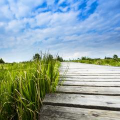 boardwalk bog landscape with cloud sky : Stock Photo or Stock Video Download rcfotostock photos, images and assets rcfotostock | RC-Photo-Stock.: