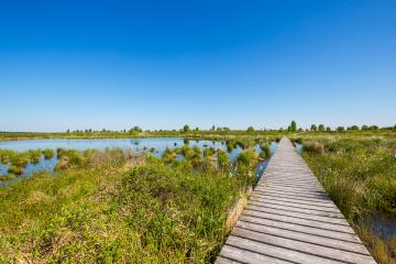 boardwalk in to a bog landscape (Hautes Fagnes) at spring- Stock Photo or Stock Video of rcfotostock | RC-Photo-Stock
