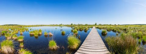 boardwalk over a bog lake at the Hautes Fagnes panorama : Stock Photo or Stock Video Download rcfotostock photos, images and assets rcfotostock | RC-Photo-Stock.: