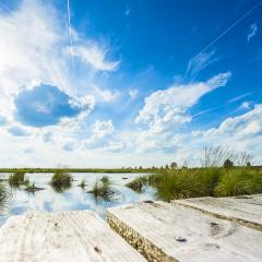 boardwalk over a bog lake with Blue Cloudy Sky- Stock Photo or Stock Video of rcfotostock | RC-Photo-Stock