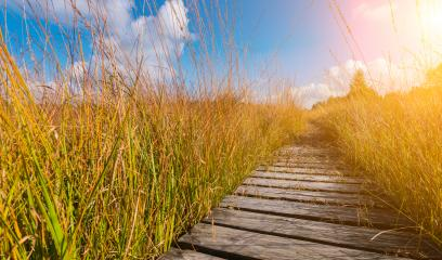 boardwalk to the High Fens moor at autumn, Belgium, Hohes Venn- Stock Photo or Stock Video of rcfotostock | RC-Photo-Stock