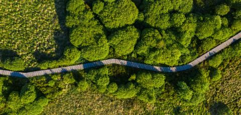 Boardwalk Trail in the Hohes Venn at the Eifel National Park, Drone Shot : Stock Photo or Stock Video Download rcfotostock photos, images and assets rcfotostock | RC-Photo-Stock.: