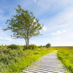 boardwalk with trees in bog veen landscape with cloud sky : Stock Photo or Stock Video Download rcfotostock photos, images and assets rcfotostock | RC-Photo-Stock.: