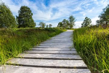 boardwalk with trees in bog veen landscape with cloud sky- Stock Photo or Stock Video of rcfotostock | RC-Photo-Stock