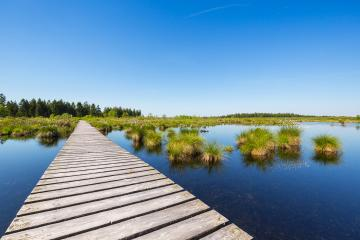bog bond with wooden trail at the High Fens (Hautes Fagnes)- Stock Photo or Stock Video of rcfotostock | RC-Photo-Stock