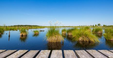 bog lake at spring on the High Fens (Hautes Fagnes) : Stock Photo or Stock Video Download rcfotostock photos, images and assets rcfotostock | RC-Photo-Stock.: