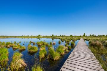 bog lake in a bog landscape at the Hautes Fagnes (Hohes Venn)- Stock Photo or Stock Video of rcfotostock | RC-Photo-Stock