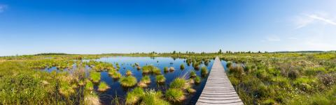 bog landscape High Fens (Hautes Fagnes) panorama : Stock Photo or Stock Video Download rcfotostock photos, images and assets rcfotostock | RC-Photo-Stock.:
