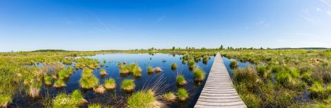 bog landscape with wooden trail over a lake panorama : Stock Photo or Stock Video Download rcfotostock photos, images and assets rcfotostock | RC-Photo-Stock.: