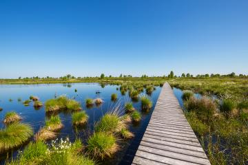 bog pond at the High Fens (Hohes Venn) at spring in belgium : Stock Photo or Stock Video Download rcfotostock photos, images and assets rcfotostock | RC-Photo-Stock.: