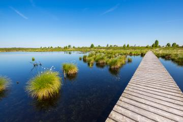 bog pond at the Hohes Venn (Hautes Fagnes) : Stock Photo or Stock Video Download rcfotostock photos, images and assets rcfotostock | RC-Photo-Stock.: