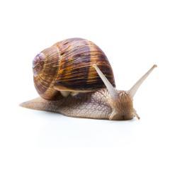 bored snail- Stock Photo or Stock Video of rcfotostock   RC-Photo-Stock