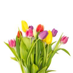 bouquet of colorful tulips : Stock Photo or Stock Video Download rcfotostock photos, images and assets rcfotostock | RC-Photo-Stock.: