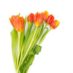 bouquet of orange tulips : Stock Photo or Stock Video Download rcfotostock photos, images and assets rcfotostock | RC-Photo-Stock.: