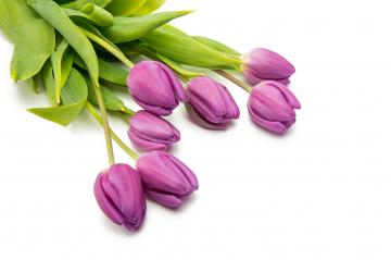 bouquet of purple tulips- Stock Photo or Stock Video of rcfotostock | RC-Photo-Stock