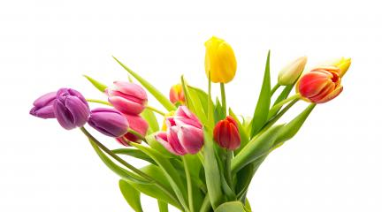 Bouquet of tulip flowers- Stock Photo or Stock Video of rcfotostock | RC-Photo-Stock