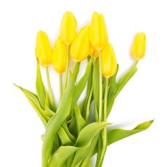 bouquet of yellow tulips- Stock Photo or Stock Video of rcfotostock | RC-Photo-Stock