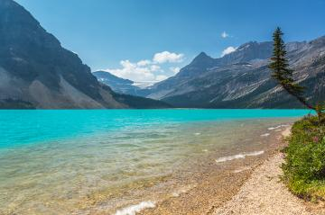 Bow Lake in british columbia banff in canada- Stock Photo or Stock Video of rcfotostock | RC-Photo-Stock