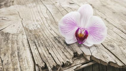branch of orchids on wooden background- Stock Photo or Stock Video of rcfotostock | RC-Photo-Stock