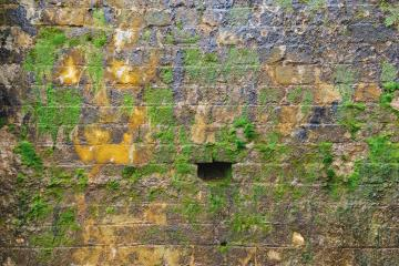 Brick wall with moss growing out : Stock Photo or Stock Video Download rcfotostock photos, images and assets rcfotostock | RC-Photo-Stock.: