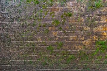 Brick wall with moss growing out of it : Stock Photo or Stock Video Download rcfotostock photos, images and assets rcfotostock | RC-Photo-Stock.: