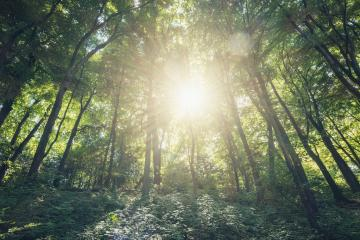 Bright sun shines in the forest : Stock Photo or Stock Video Download rcfotostock photos, images and assets rcfotostock | RC-Photo-Stock.: