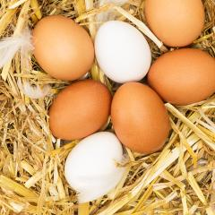 brown and white eggs on straw- Stock Photo or Stock Video of rcfotostock | RC-Photo-Stock