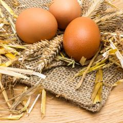 brown eggs from the farm- Stock Photo or Stock Video of rcfotostock | RC-Photo-Stock