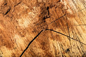 brown Wood tree texture pattern- Stock Photo or Stock Video of rcfotostock | RC-Photo-Stock