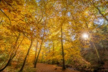 Bäume im Herbstmit Sonnenstern, orange, Laub, Wald : Stock Photo or Stock Video Download rcfotostock photos, images and assets rcfotostock | RC-Photo-Stock.: